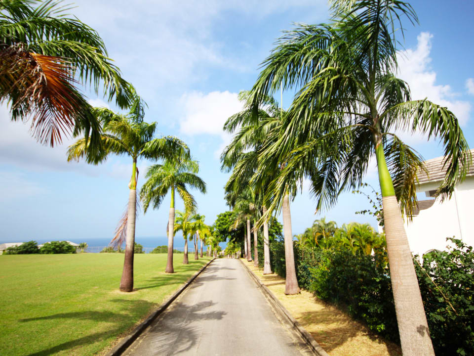 Palm lined entrance to estate
