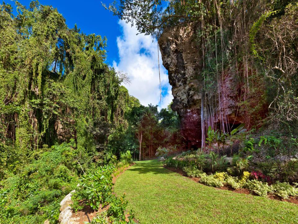 Tropical gully
