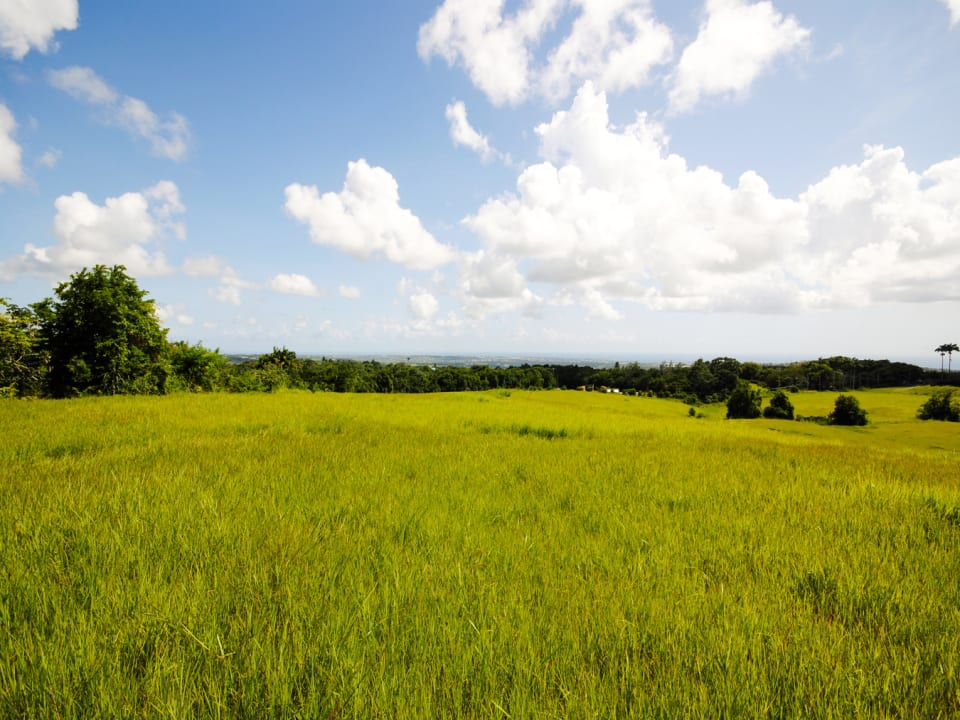 Lands of Lion Castle Plantation