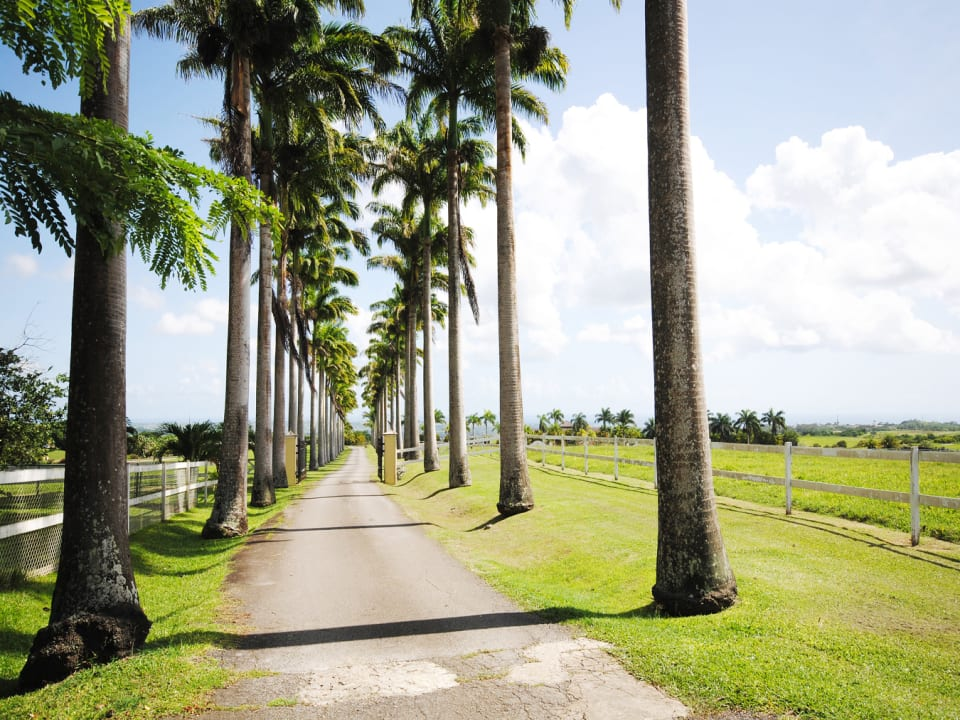 Royal palm lined driveway entrance
