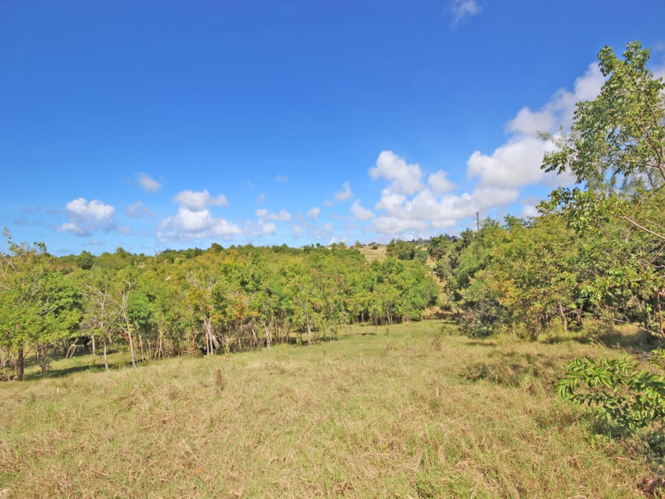 2.5 acre parcel just a short drive to Warrens