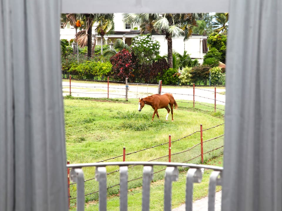 Looking Out at the Horses