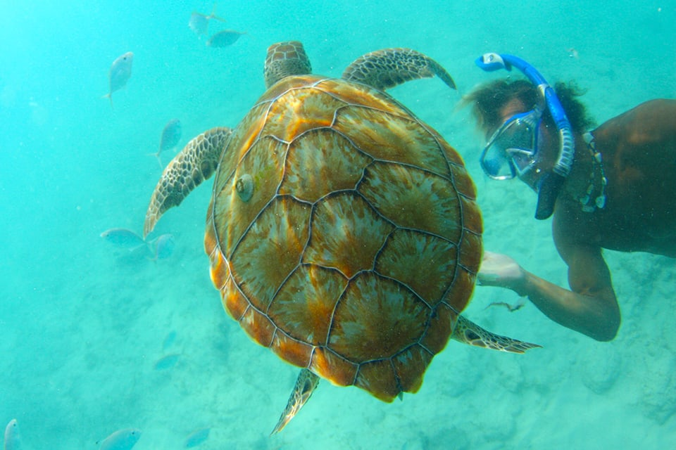Talma Turtles