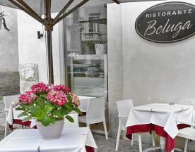 Beluga, Verona
