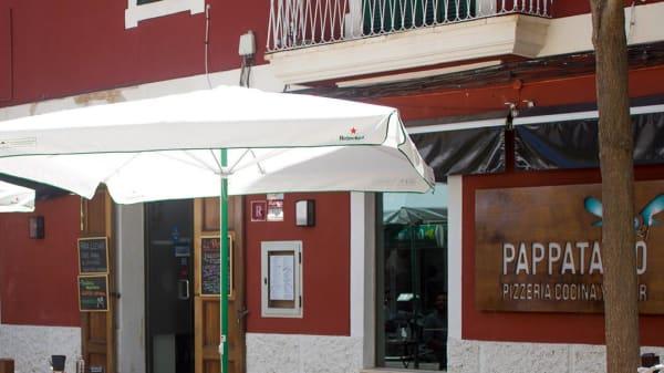 Pappatacio, Palma de Mallorca