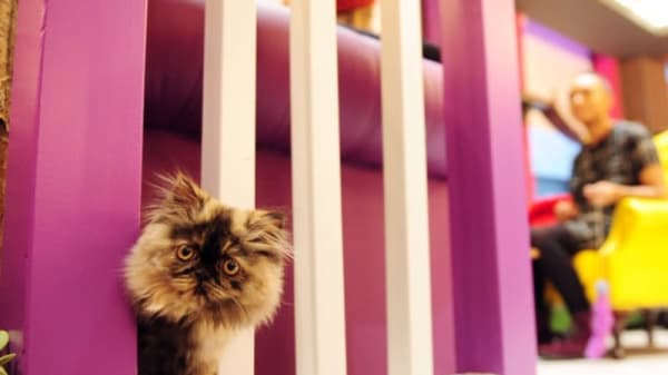 Kitty Café Leeds, Leeds