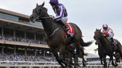 Punchestown Festival Preview