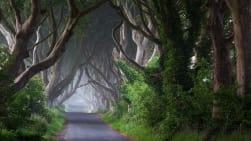 Crainn na hÉireann (OS & TS)