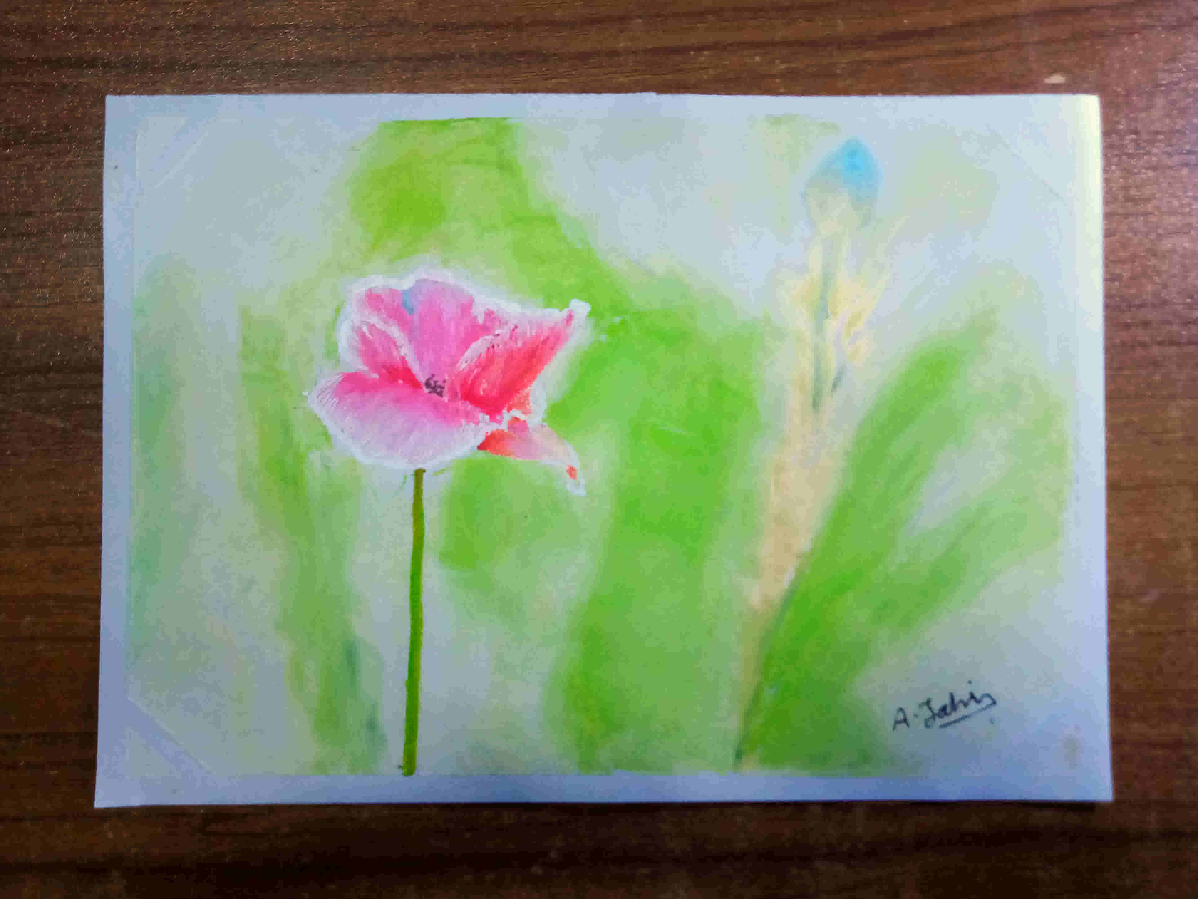 Poppy Flower's Featured Photo