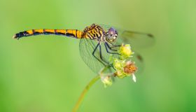 Focusing-dragonfly-macro-photography-960x640.jpg