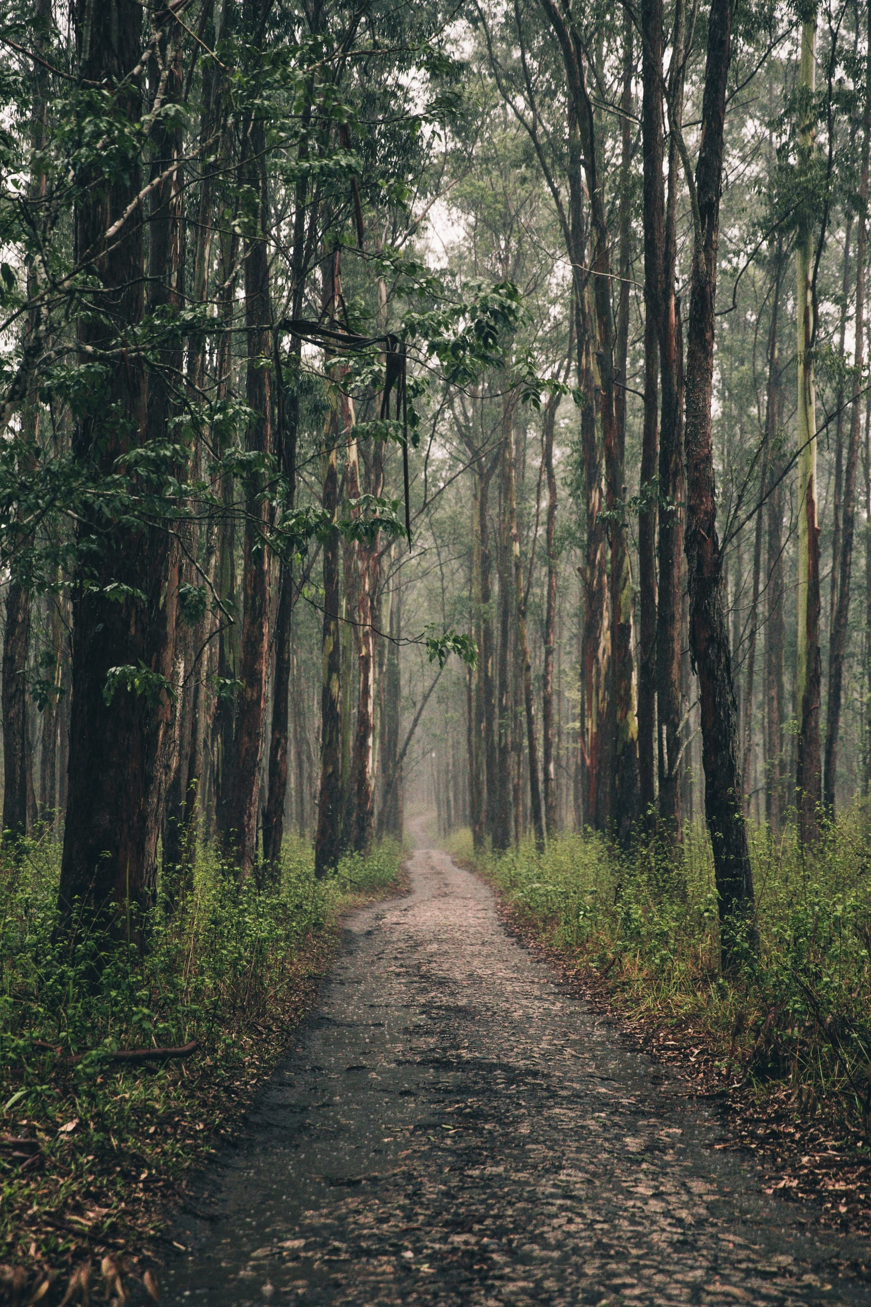 iso-republic-long-forest-path