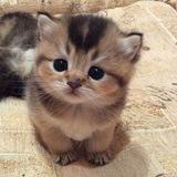 prettylittlecats