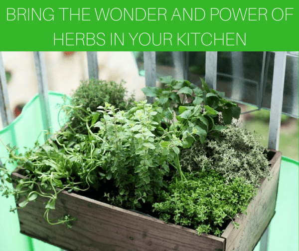 Bring the wonder and power of herbs in your kitchen 1