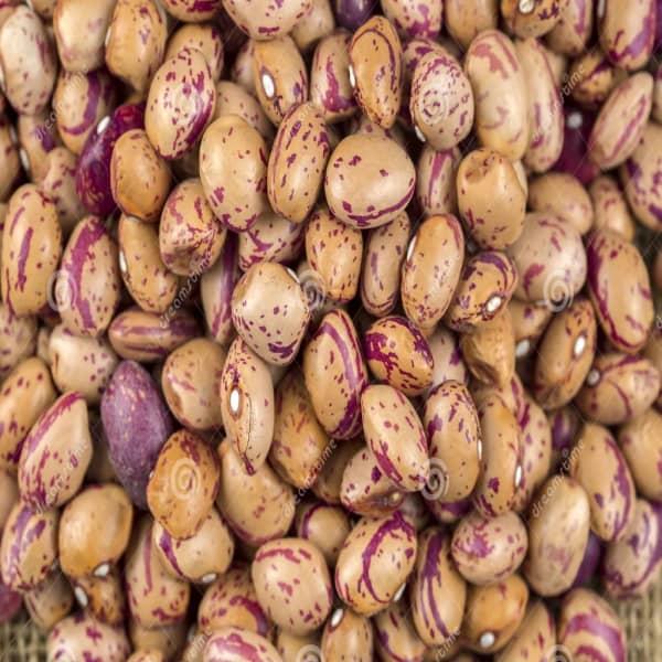 Romano Beans - Organic 1
