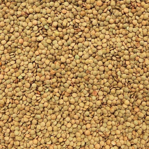 Organic Lentils - Green 1