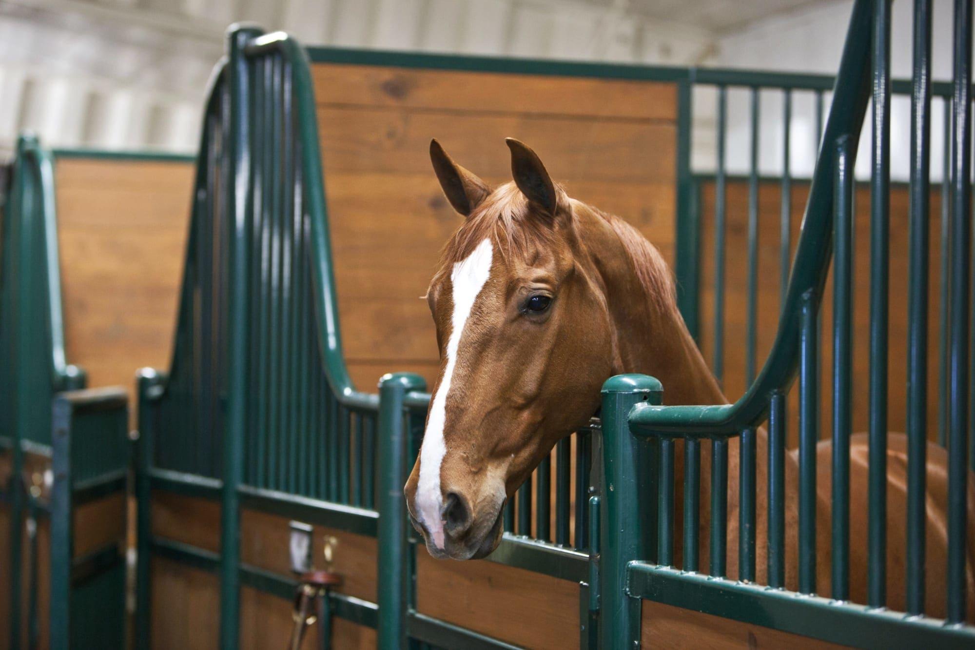 The Grove Equestrian