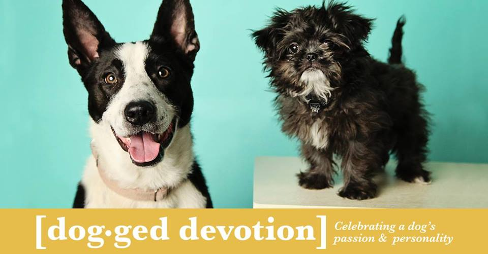 dogged devotion