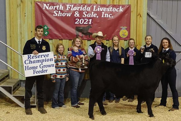 Suwannee FFA Takes Reserve Champion Feeder Steer and Home Grown Feeder