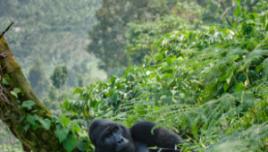 The Romantic Tourist - Uganda