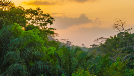 The Romantic Tourist - Liberia