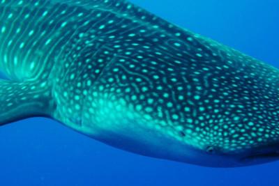 Snorkeling in Belize's Great Blue Hole