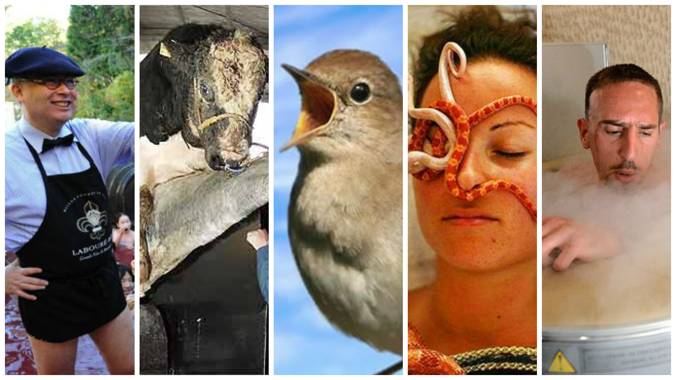 weird spa treatments from around the world - wine bath, bird poop facial, snake massage, cryotherapy, bull semen conditioner