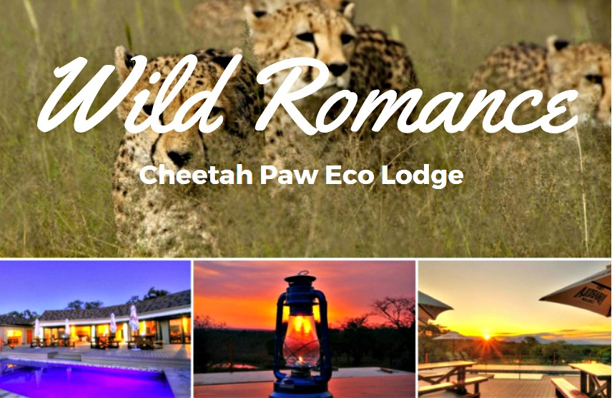 Wild cheetahs in south Africa | Cheetah Paw at night | A buring gas lamp at sunset | Sunset at cheetah paw
