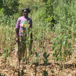 The Water Project: Elukho Community A -  Vegetable Garden