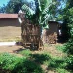 The Water Project: Mukhangu Community, Okumu Spring -  Bathroom Made From Dry Maize Stalks