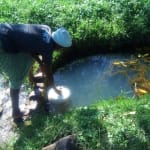 The Water Project: Mukhangu Community, Okumu Spring -  Dunking Jerrycan Into Spring