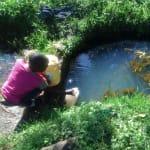 The Water Project: Mukhangu Community, Okumu Spring -  Fetching Water At Okumu Spring