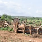 The Water Project: Maluvyu Community B -  Animal Pen