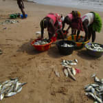 The Water Project: Pewullay Primary School -  Sorting Fish