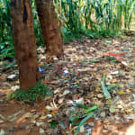 The Water Project: Bumuyange Primary School -  Garbage Disposal
