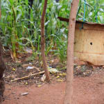 The Water Project: Kathungutu Community -  Small Chicken Coop