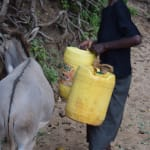 The Water Project: Kathungutu Community -  Loading Water Onto Donkey