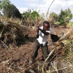 The Water Project: Rubana Yagilewo Community -  Clearing And Reparing Cabbage Garden