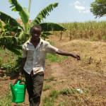 The Water Project: Rubana Yagilewo Community -  Kato Sylvester Watering Cabbage Garden
