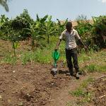 The Water Project: Rubana Yagilewo Community -  Watering Cabbage Garden