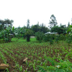 The Water Project: Kapkures Primary School -  Community Farms