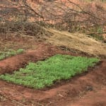The Water Project: Maluvyu Community E -  Garden Near The Dam And Well