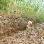 The Water Project: Hirumbi Community, Khalembi Spring -  Digging Drainage Channel
