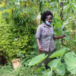 The Water Project: Hirumbi Community, Khalembi Spring -  We Met Alice At Her Farm Checking On Her Arrowroots