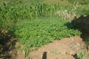 The Water Project: Masingo Slum / Pillar Project - Kakamega, Kenya -