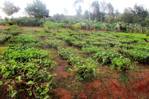 The Water Project: Bumuyange Secondary School -  School Farm