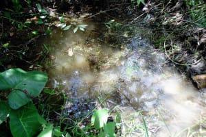 The Water Project: Mahanga Primary School -  Magumba Spring