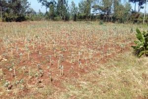 The Water Project: Kilingili Primary School -  School Garden