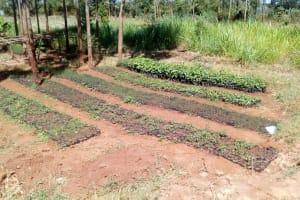 The Water Project: Kilingili Primary School -  Tree Nursery