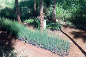 The Water Project: Kilingili Primary School -  Plants