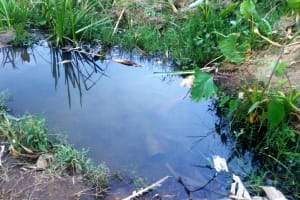The Water Project: Mwinaya Community, Severe Spring -  Unprotected Source